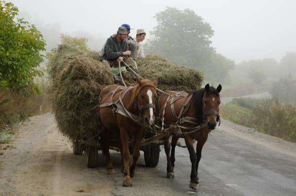 Ici, la plus part des travaux agricoles se font à la main ou avec l'aide précieuse des chevaux