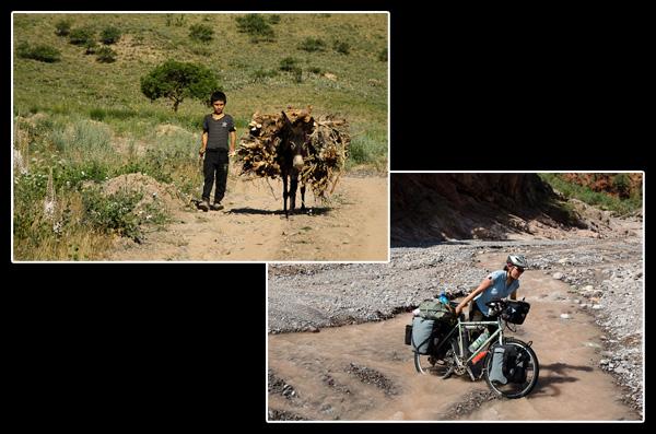 Transport de matériel à dos d'âne, ou… à dos d'ours