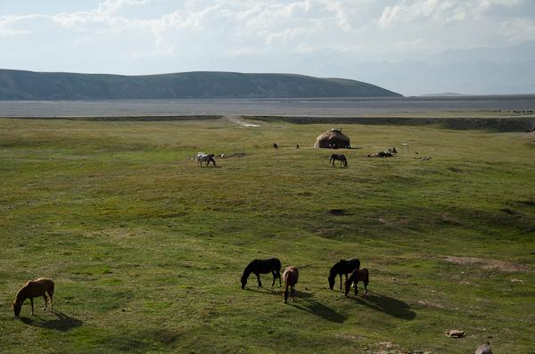 Paysage kirghize: yourtes et chevaux dans des pâturages à perte de vue