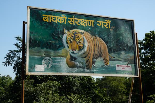 Des gros animaux présents dans ces réserves, seules des traces d'éléphants seront visibles