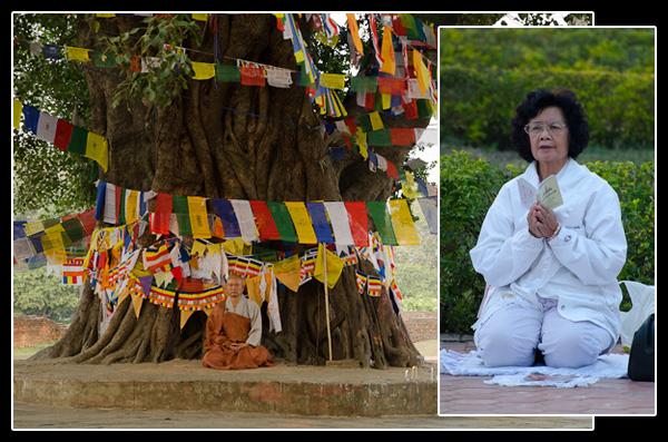 Méditation et prières sous l'arbre de la Sagesse