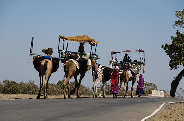 Famille nomade en transhumance. Les femmes et les enfants avec les dromadaires tandis que les hommes s'occupent des troupeaux