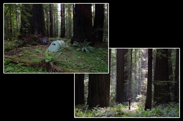 Perdus dans la forêt des mystères pour une nuit fascinante passée à parler aux arbres