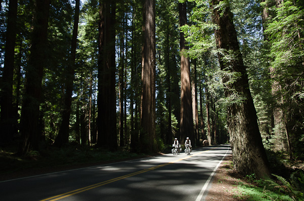 Deux petits cyclistes perdus dans une forêt fantastique
